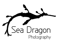 Sea Dragon Photography